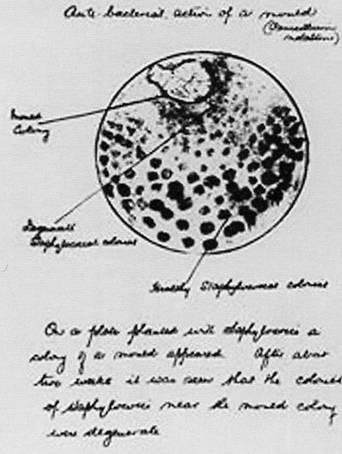 penicillus parazita